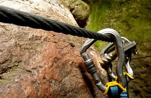 eine Seilversicherung mit Schwierigkeitsgrad Spinne