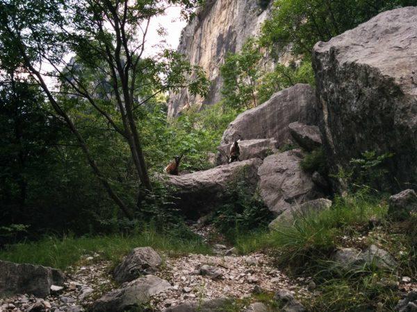 Klettersteig Colodri : Junge bergsteiger auf dem klettersteig colodri arco di trento