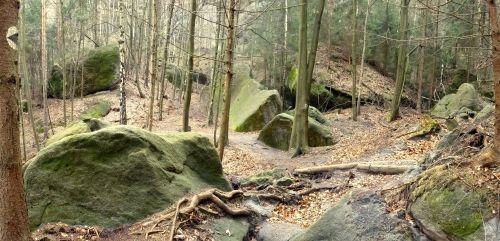 Waldstück in der Sächsischen Schweiz mit Klettermarkierung
