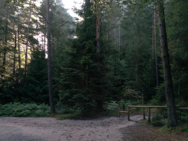 Absperrung aus Holz zwischen Bäumen