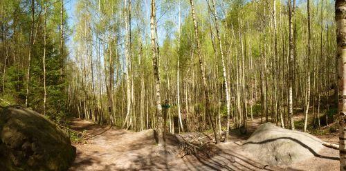 Einstieg der Wilden Hölle von der Oberen Affensteinpromenade über ein Birkenwäldchen