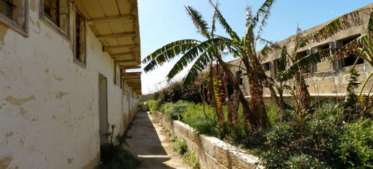 Halb vertrocknete Palmen in der Tierzuchtanlage auf Comino