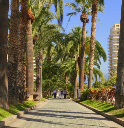 Palmenallee mit Fußgängern