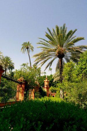 Palmen im Park des Alcazar von Sevilla