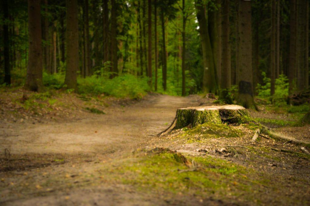 Foto: Baumstumpf am Rauenstein