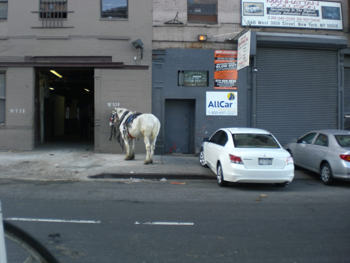 Ein Pferd steht neben zwei Autos auf dem Bürgersteig