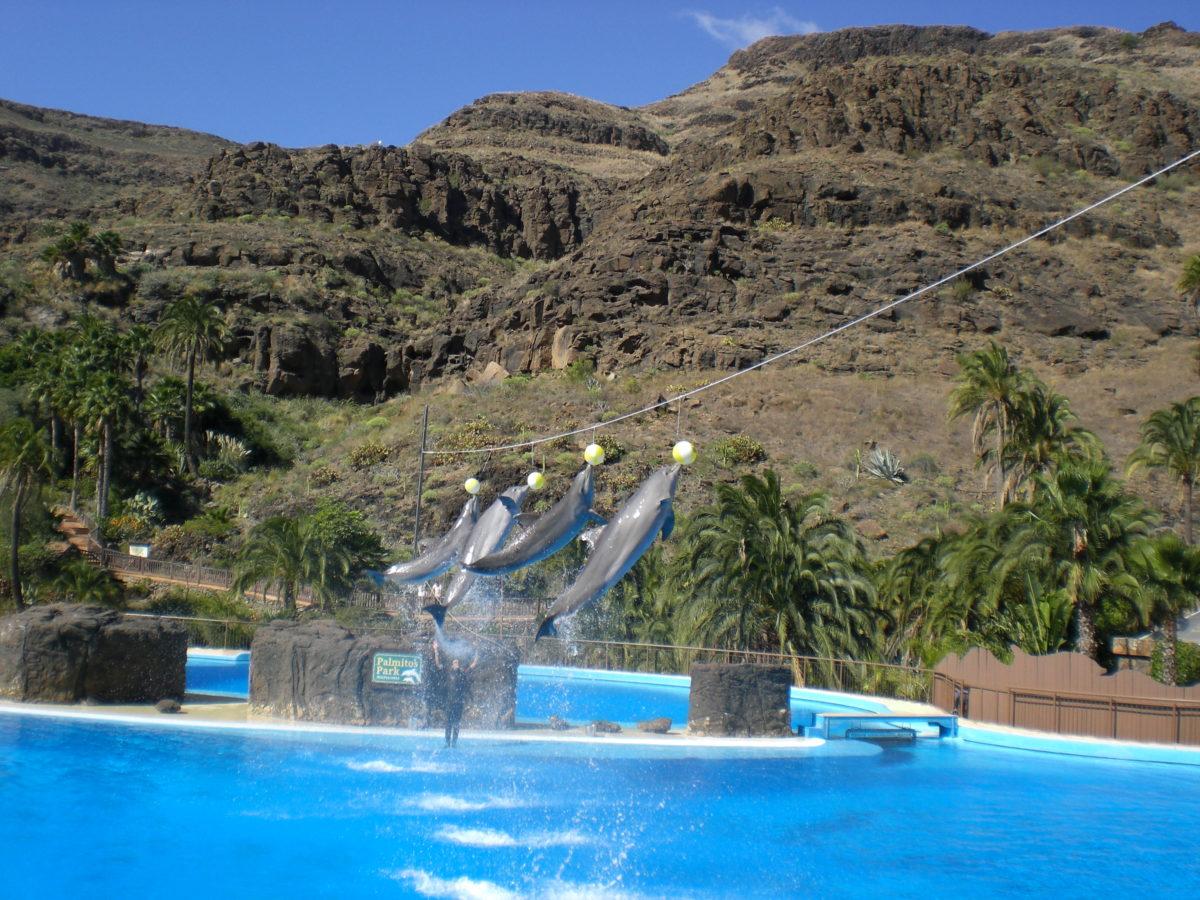 vier Delfine springen bei der Delfinshow des Palmitos Park aus dem Wasser.