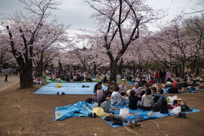 Yoyogi Park zu Hanami