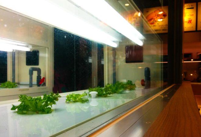 Künstliche Salatplantage im Subway 831 lab