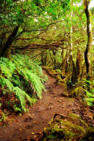 Lehmhaltiger Wanderweg im Nebelurwald von Chinobre