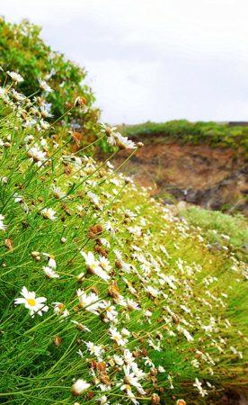 Blumenmeer im Barranco