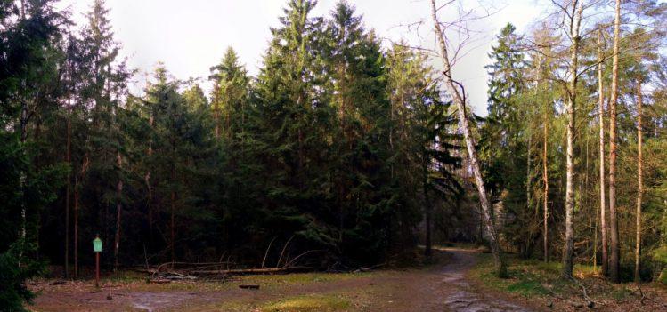 Freifläche am alten Steinbruch - Einstieg zum Begangsteig