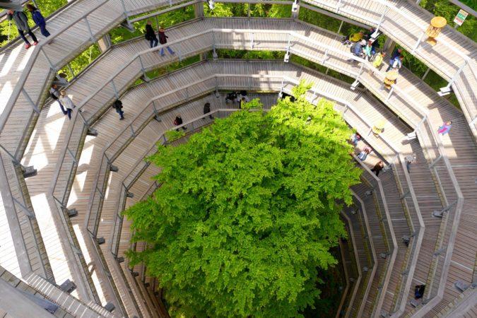 Blick in den Aussichtsturm des Baumwipfelpfades auf Rügen