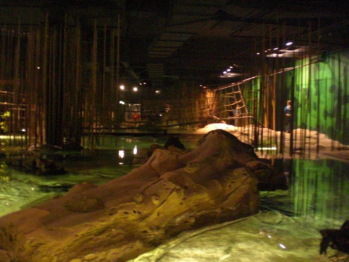 Eine der wärmeren Klimalandschaften im Klimahaus Bremerhaven. Mit nachgestalteter Lagunenlandschaft und Fischen.