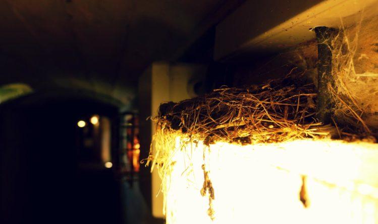 Schwalbennest über einer Lampe in einem Bunker aus dem 2. Weltkrieg