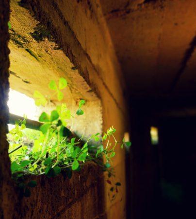 Pflanzen in einem Beobachtungsschlitz in einem Bunker aus dem 2. Weltkrieg