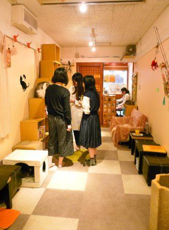 Katzencafe in Japan