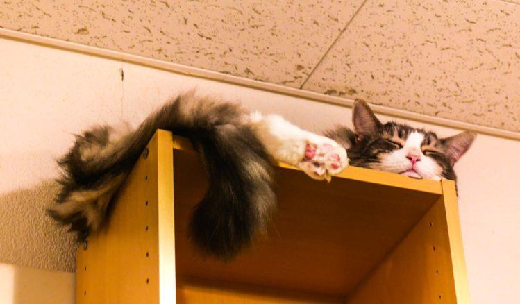 Schlafende Katze auf einem Regal