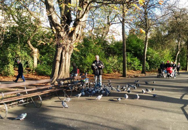 Mann mit Tauben im St. Stephens Green