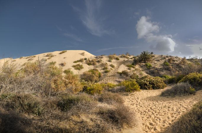 Naturschtzgebiet der Dünen von Maspalomas
