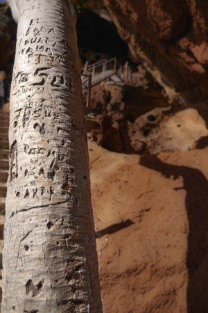 Drachenbaum am Cenobio de Valeron
