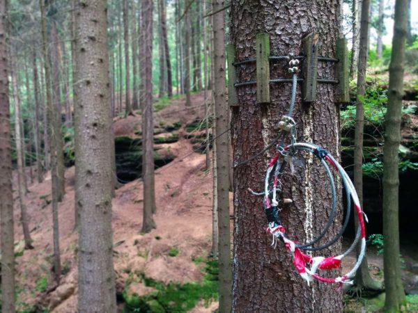 Seil an Baum für Seilbrücke