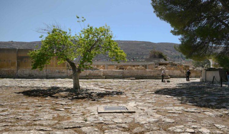 Baum auf einem Steinplatz beim Palast von Knossos