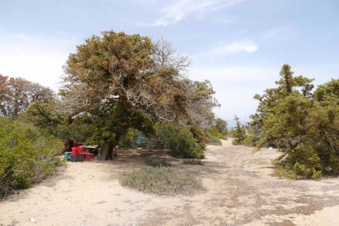 Plastiküberreste unter Baum auf Insel Chrisi