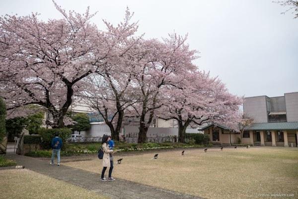 Jiyugakuen Myonichikan Mädchenschule mit Kirschbäumen