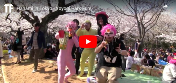 Video vom Yoyogi Park in Tokio zu Hanami