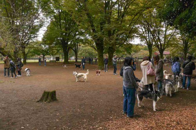 Japaner mit Hunden im Park