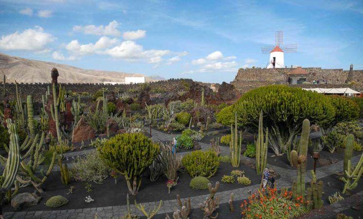 Kakteen im Jardin de Cactus