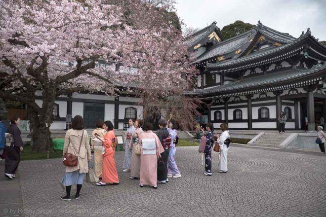 Kirschbaum, Geishas und Tempelgebäude beim Hase-dera Tempel