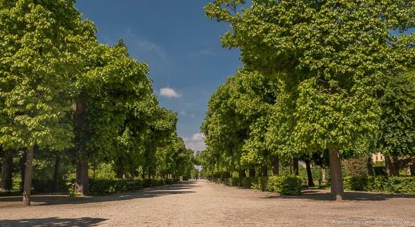Bild: Allee im Schönbrunner Schlosspark