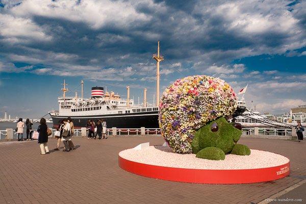 Bild: Blumenigel und Museumsschiff NYK Hikawa maru