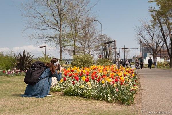 Bild: Japanisches Mädchen fotografiert Tulpen in Yokohama