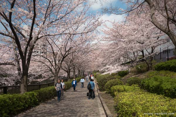 Fußgängerallee am Meguro River