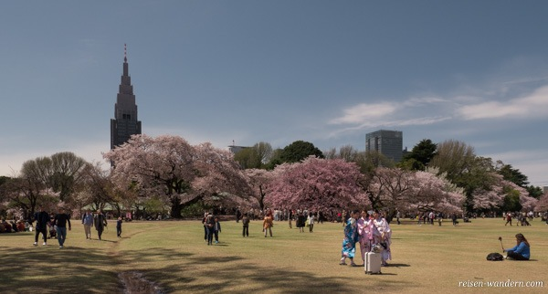 Shinjuku Gyoen Park zur Kirschblüte