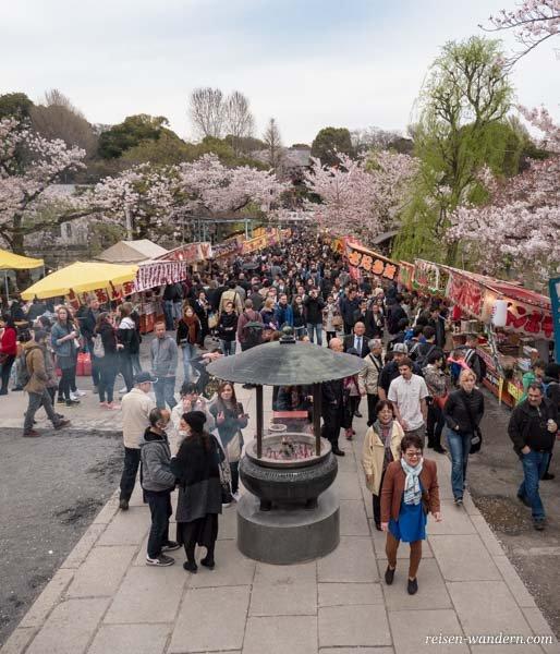 Kirschblütenfest im Ueno Park