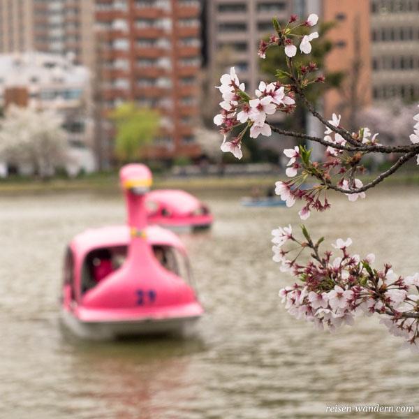 Tretboote in Schwanform im Ueno Park