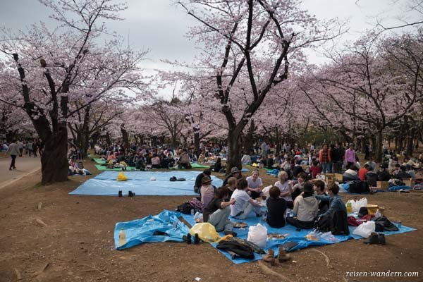Kirschblütenfest im Yoyogi Park