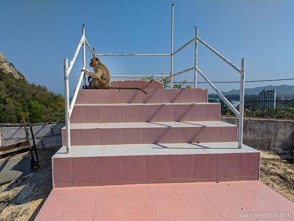Affe auf einer Treppe des Wat Khao Takiab in Hua Hin