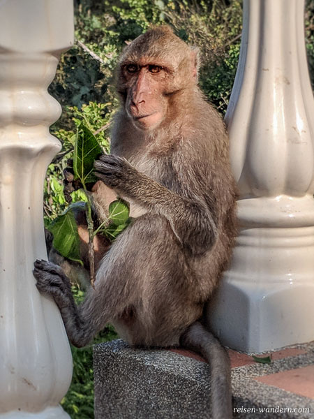 Sitzender Affe am Tempel Wat Khao Takiab