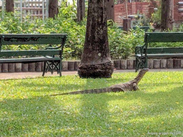 Waran im Chatuchak-Park