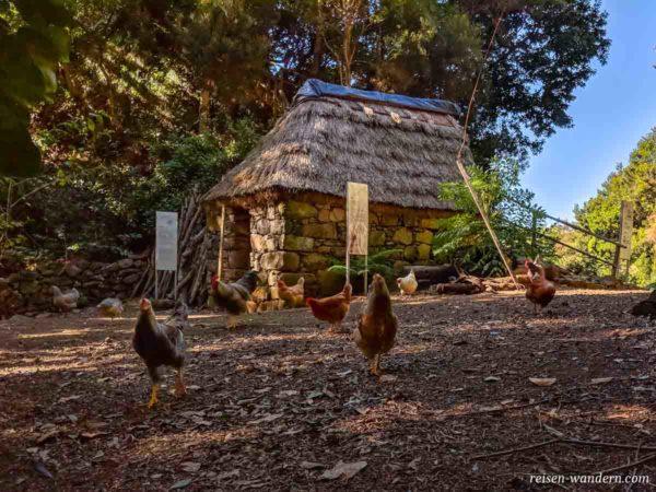 Hühnerfarm beim Museum Rota da Cal