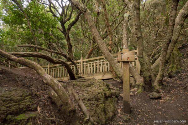 Brücke an einem Wanderweg im Lorbeerwald