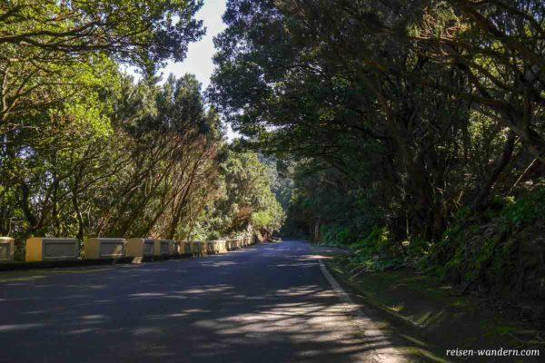Eine der engen Straßen im Anaga Gebirge