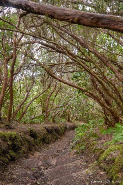 Weg im Urwald von Chinobre