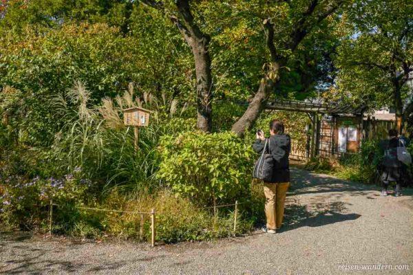 Japaner beim Fotografieren von Blumen im Mukojima Hyakka-en Gard