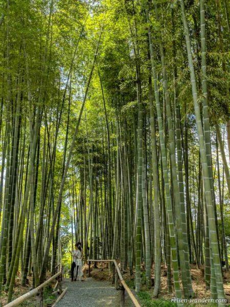 Bambuswald im Kōdaiji Tempel